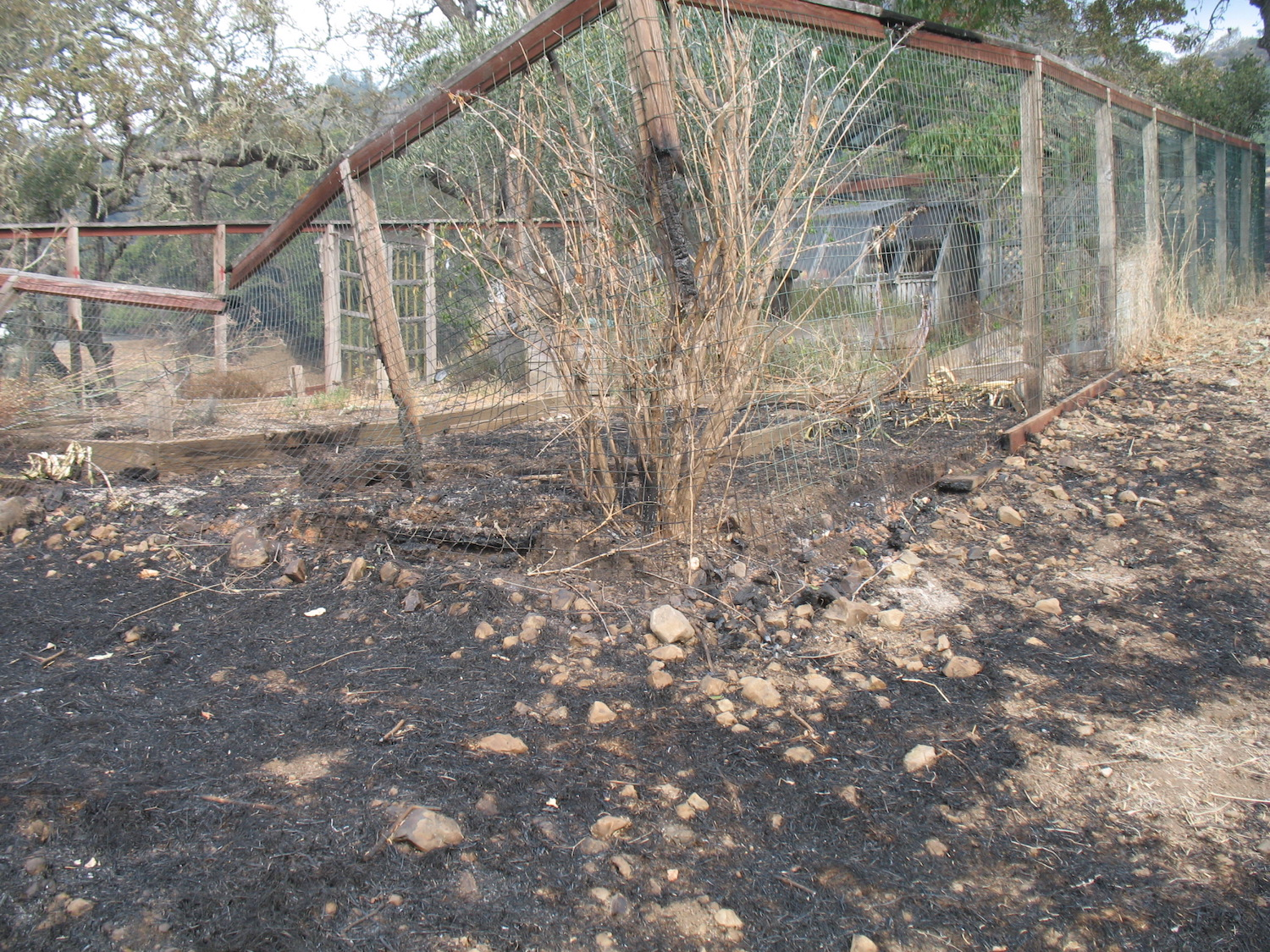 Burned-Garden-Enclosure