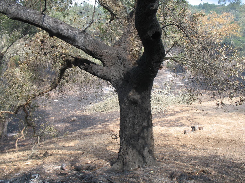 Burned-Tree-1