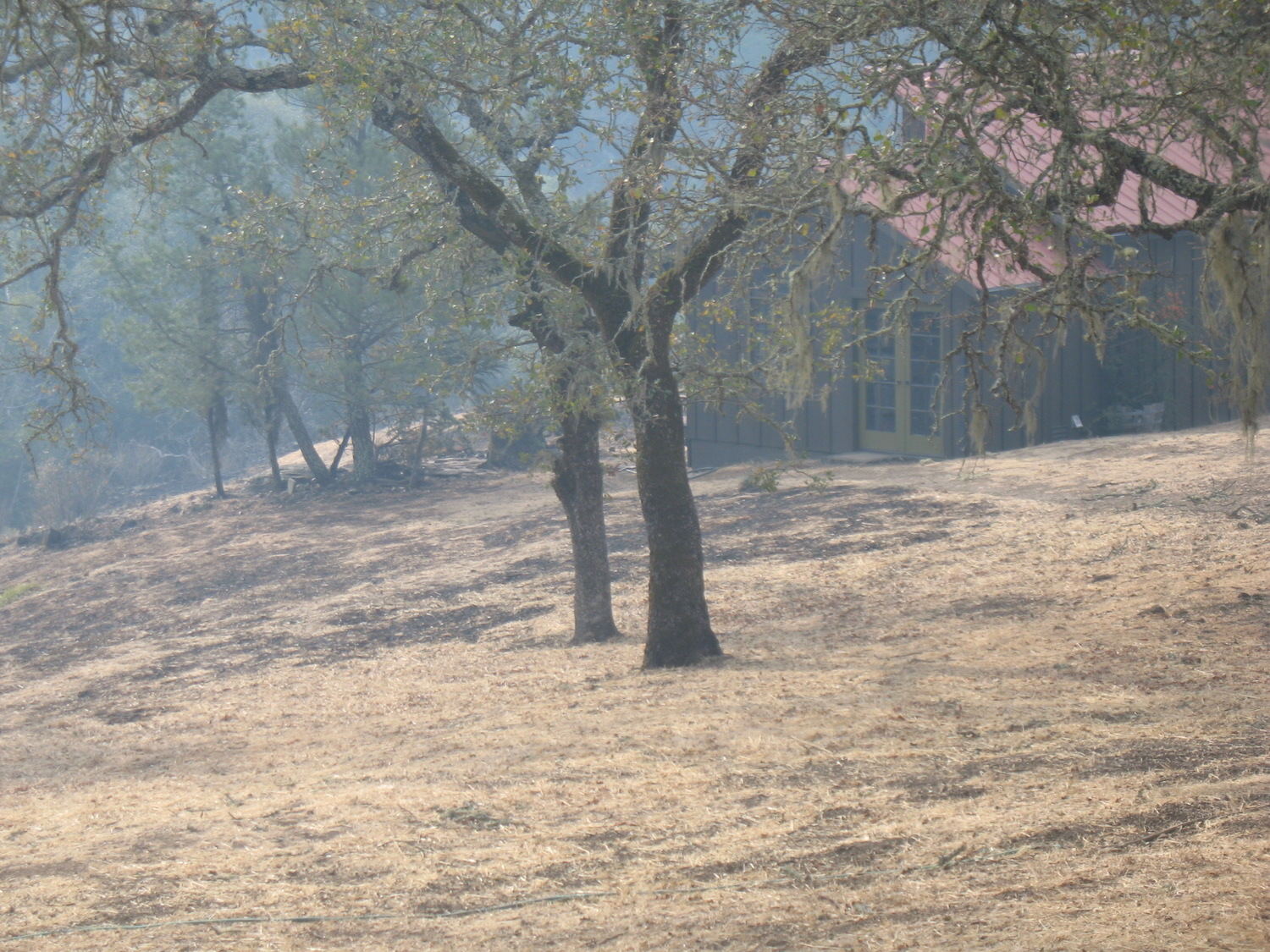 Fire-Burned-Trees-1