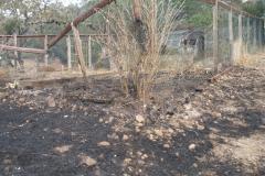 Burned-Garden-Enclosure