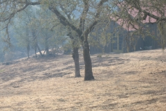 Fire-Burned-Trees