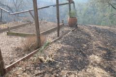 Garden-after-Fire